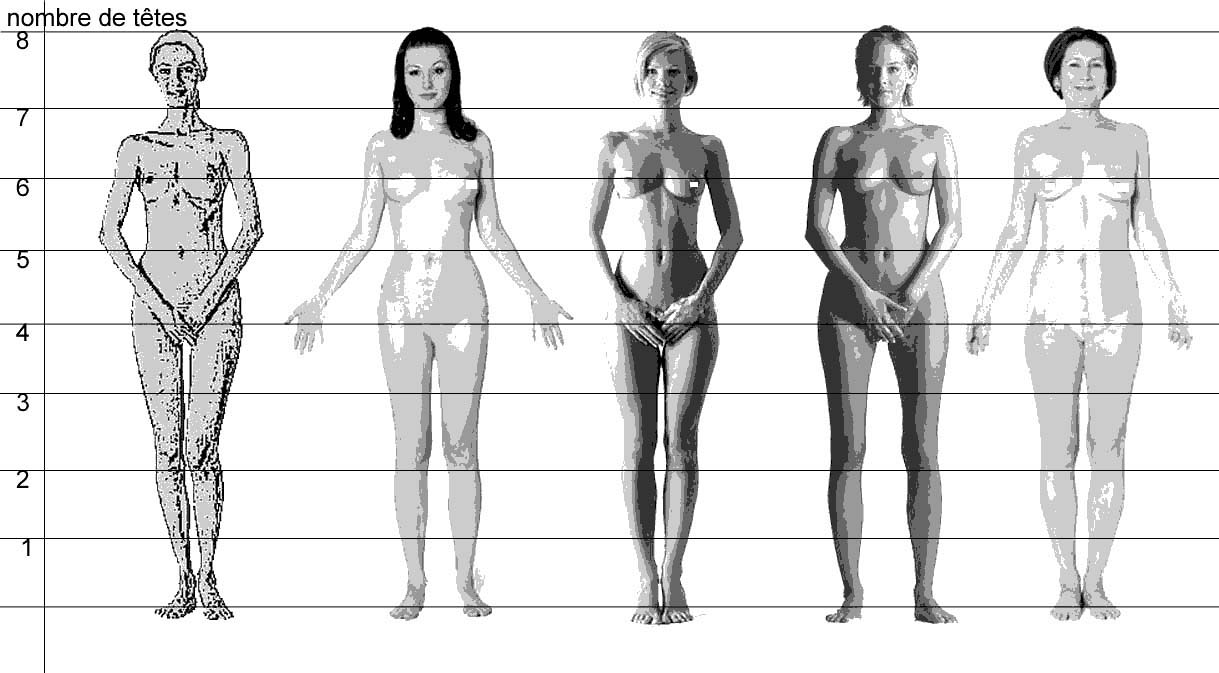 proportions corps humain femme